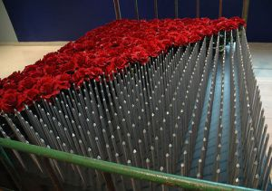 "Google images, ""A bed of roses!"
