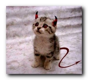 A cat in hell´s chance2